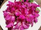 Hoa ban đẹp và hoa ban ngon. Bạn có tin không?